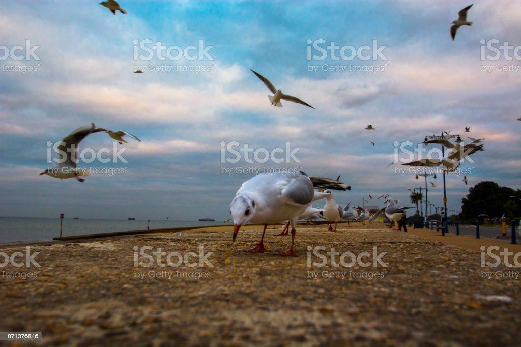 Seagulls at Ryde Beach stock photo