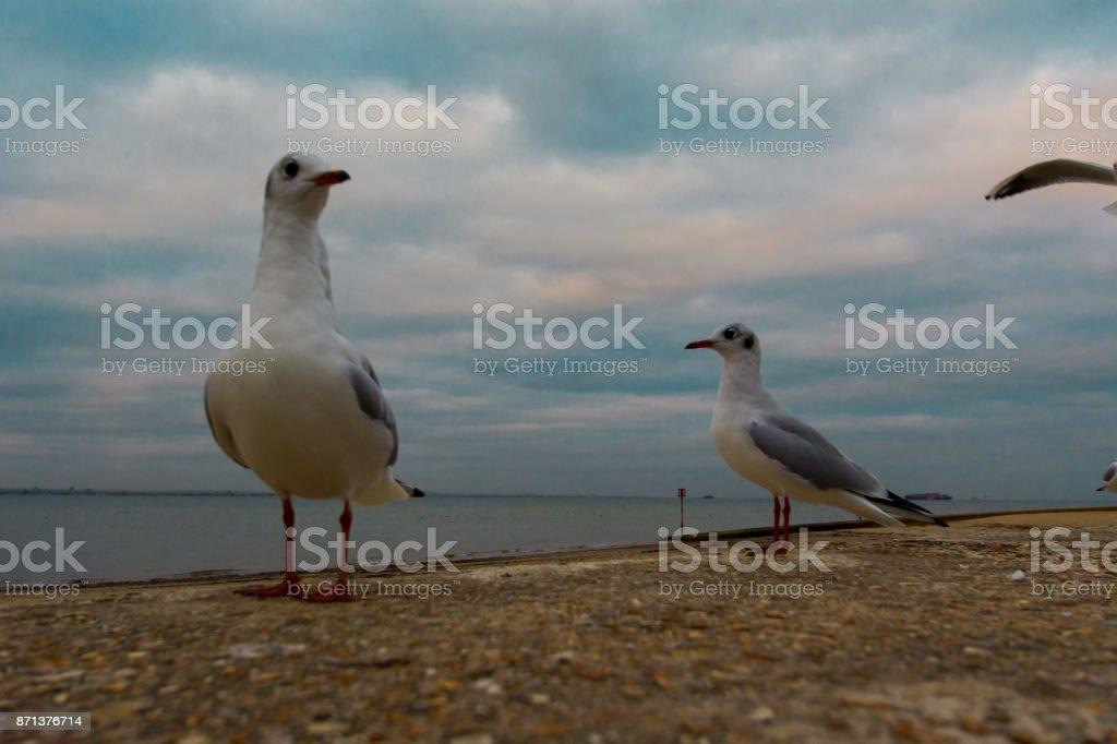 Seagulls at the Beach stock photo