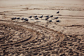 Photo of a flock of seagulls at the Bondi beach