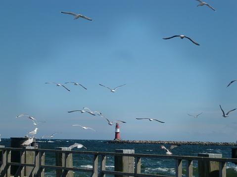Seagulls at Warnemünde in Rostock, Germany
