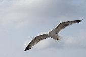 Seagulls flying alongside huge cruise ships