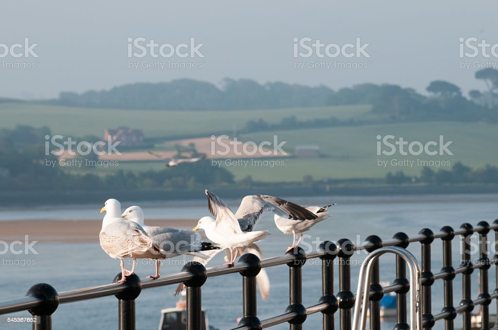Seagulls by the sea stock photo