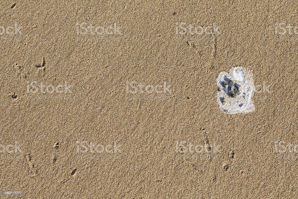 seagulls dropping at sand on beach stock photo