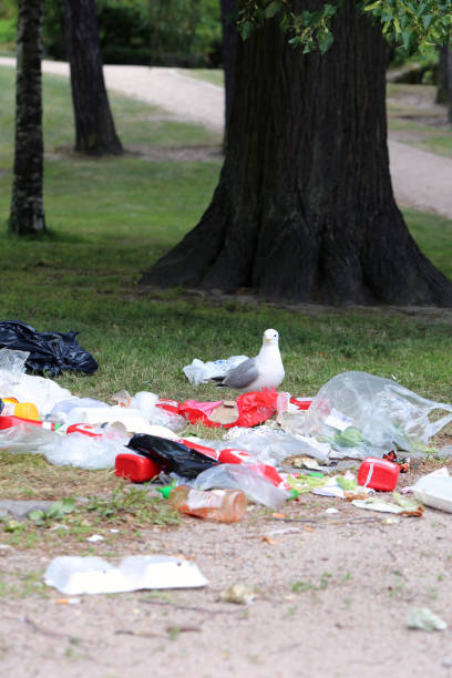 Seagulls Exploring Colorful Trash after Pride Parade in Helsinki stock photo