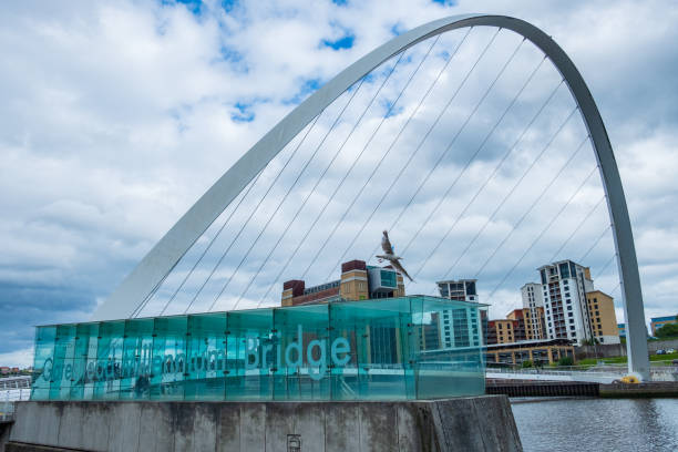 A seagulls flies at a low altitude near the Gateshead Millennium Bridge at Newcastle Quayside. The Baltic Centre for Contemporary Art is visible in the background. stock photo