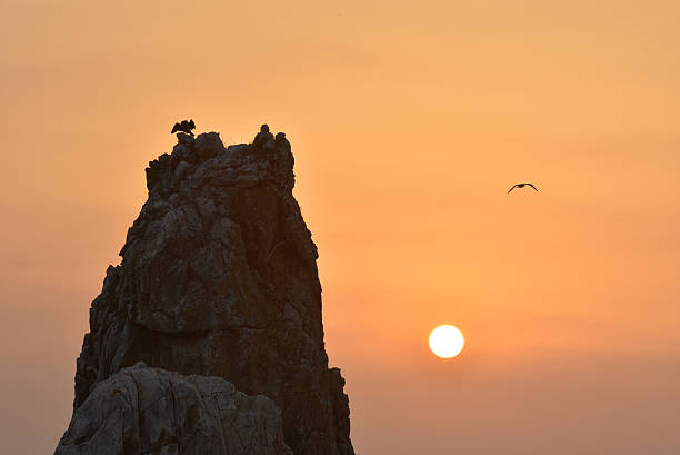 seagulls fly by the rocks at sunrise - hope - fotografias e filmes do acervo