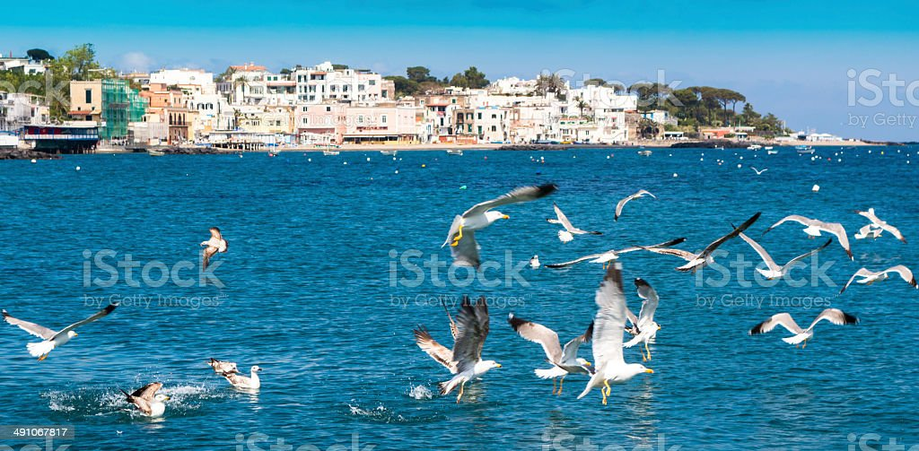 Seagulls flying above the island of Ischia stock photo