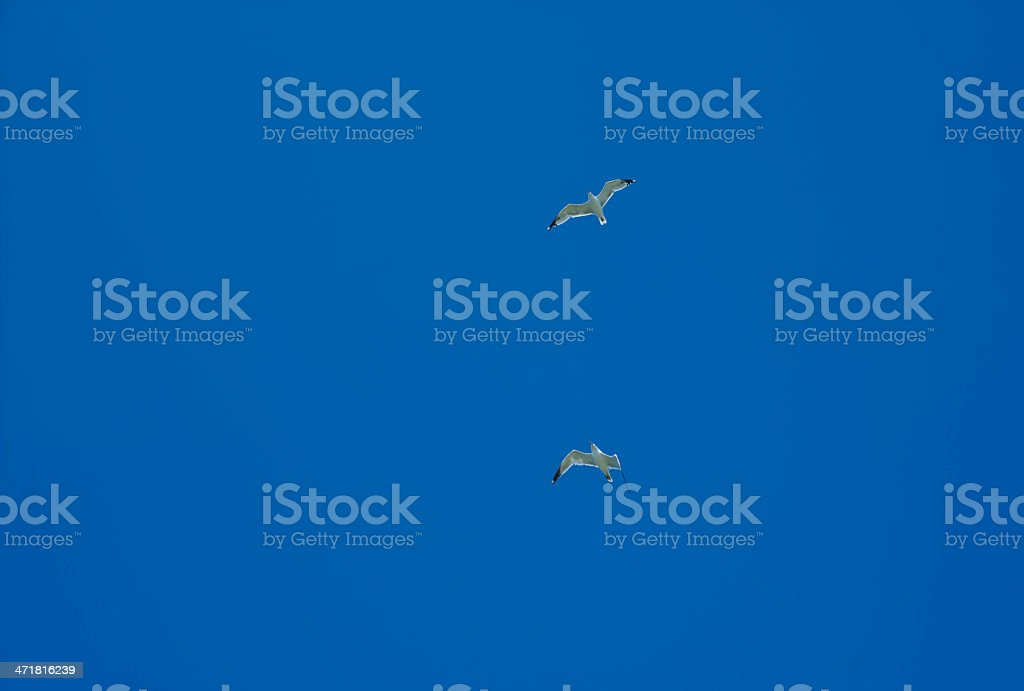 Seagulls flying across a blue sky royalty-free stock photo