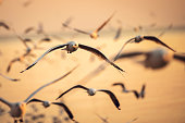 istock seagulls flying freely on the sky at sunset 641929184