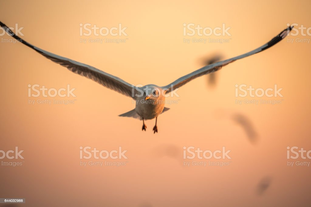 seagulls flying freely on the sky at sunset, leadership, closeup
