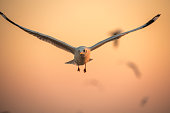 istock seagulls flying freely on the sky at sunset 644032988