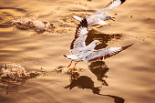 istock seagulls flying freely on the sky at sunset 664187250