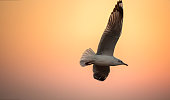 istock seagulls flying freely on the sky at sunset 667249070