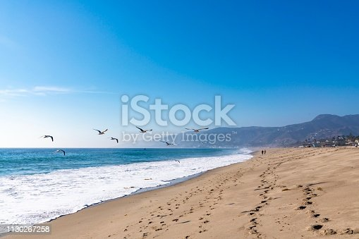Seagulls flying in Malibu beach california