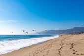 Seagulls flying in Malibu beach california