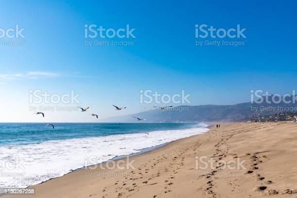 Photo of Seagulls flying in Malibu beach california
