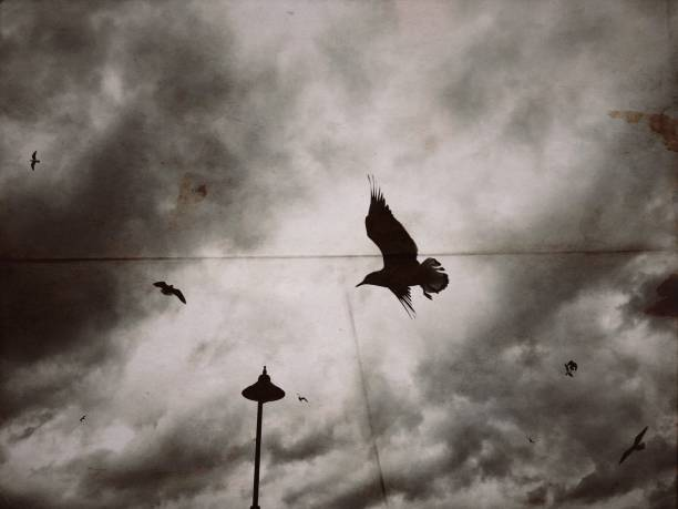 Seagulls flying in the moody sky