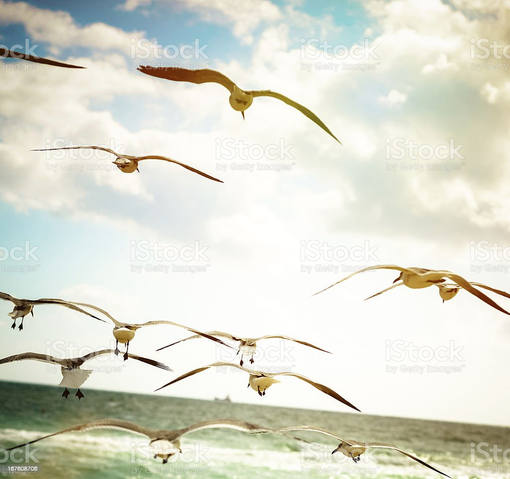 Seagulls flying on the beach royalty-free stock photo