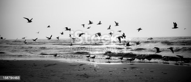 Seagull flying on the seashore at sunset, North Sea, Netherlands. Little of grain added for the mood, vignetting for balance composition. The image is processed from 16 bit RAW files in sRGB colorspace, black and white.