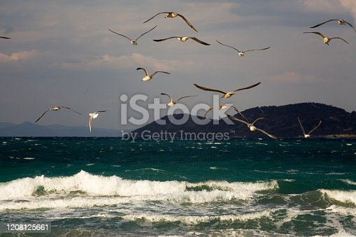 View of Seagulls flying in a windy day on the Winter Waves
