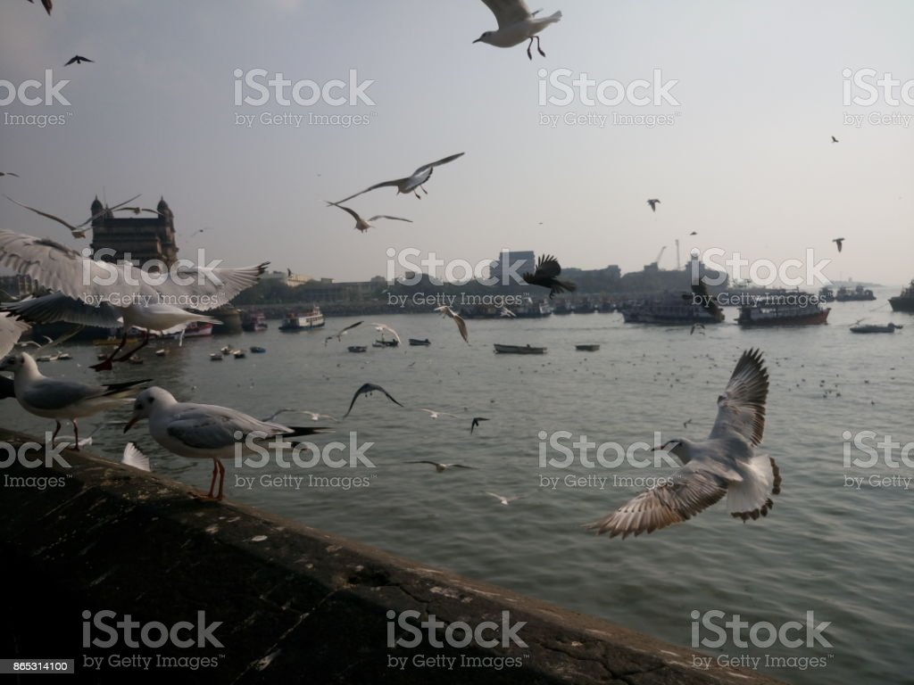 Seagulls flying over sea against sky on sunny day, Mumbai, India