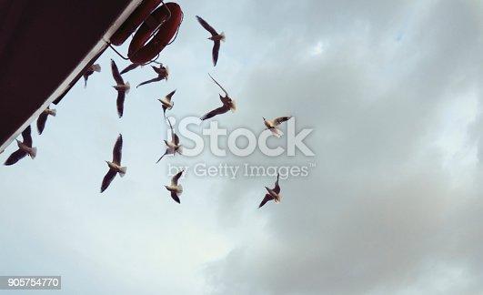 istock Seagulls Flying 905754770