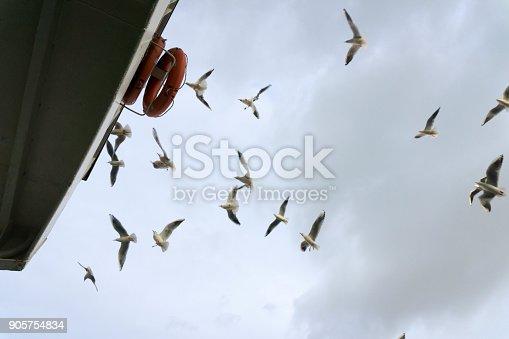 istock Seagulls Flying 905754834
