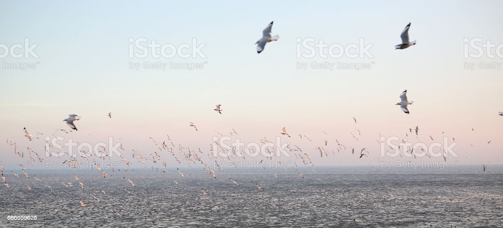 Seagulls flying seaside, animal nature fly mangrove forest the beach evening. royalty free stockfoto