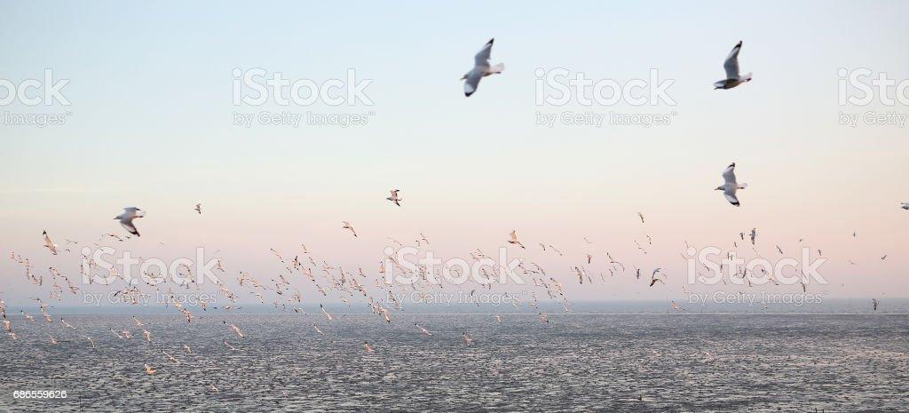 Seagulls flying seaside, animal nature fly mangrove forest the beach evening. zbiór zdjęć royalty-free