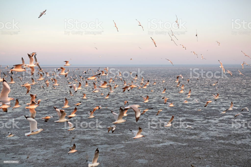 Seagulls flying seaside, animal nature fly mangrove forest the beach evening. foto stock royalty-free
