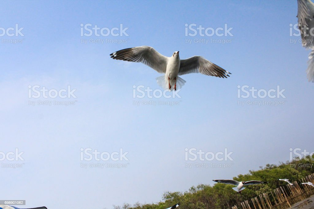 seagulls flying with sky background