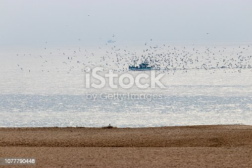 Seagulls following the fishing boat