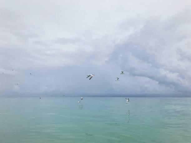 Seagulls in flight over sea stock photo