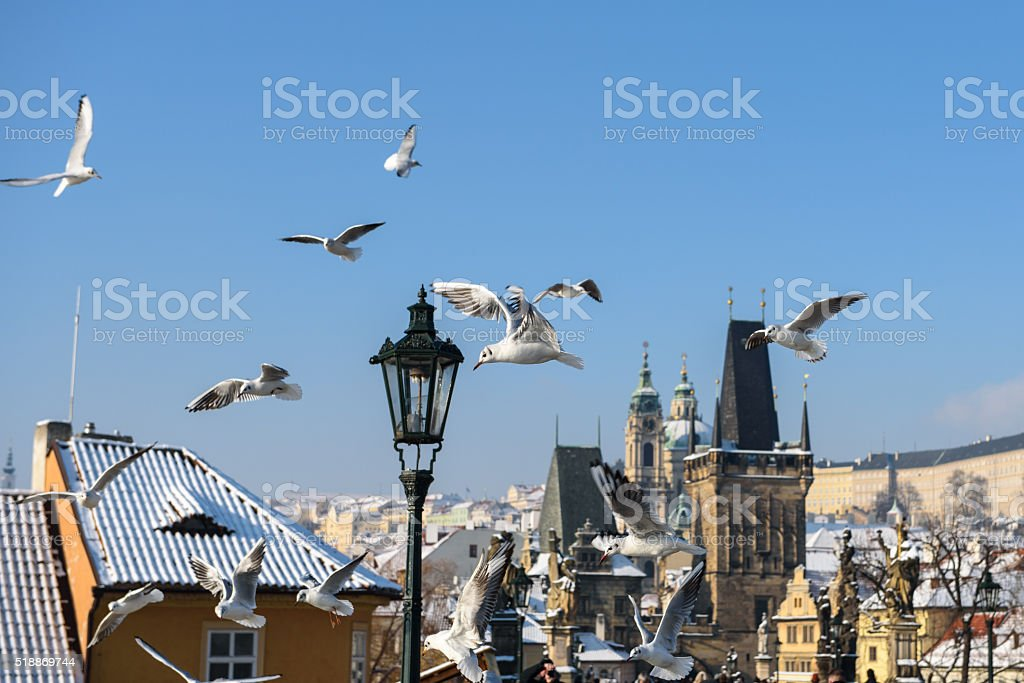 Seagulls in Prague over the Charles Bridge stock photo