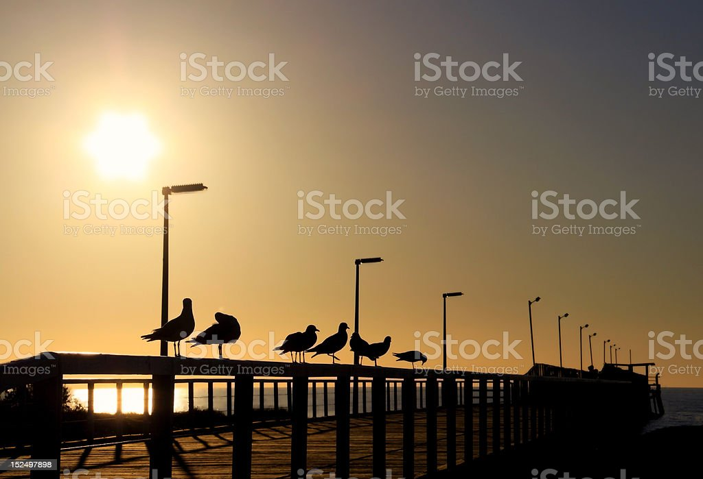 Seagulls in Silhouette on Wooden Jetty with Evening Sun royalty-free stock photo