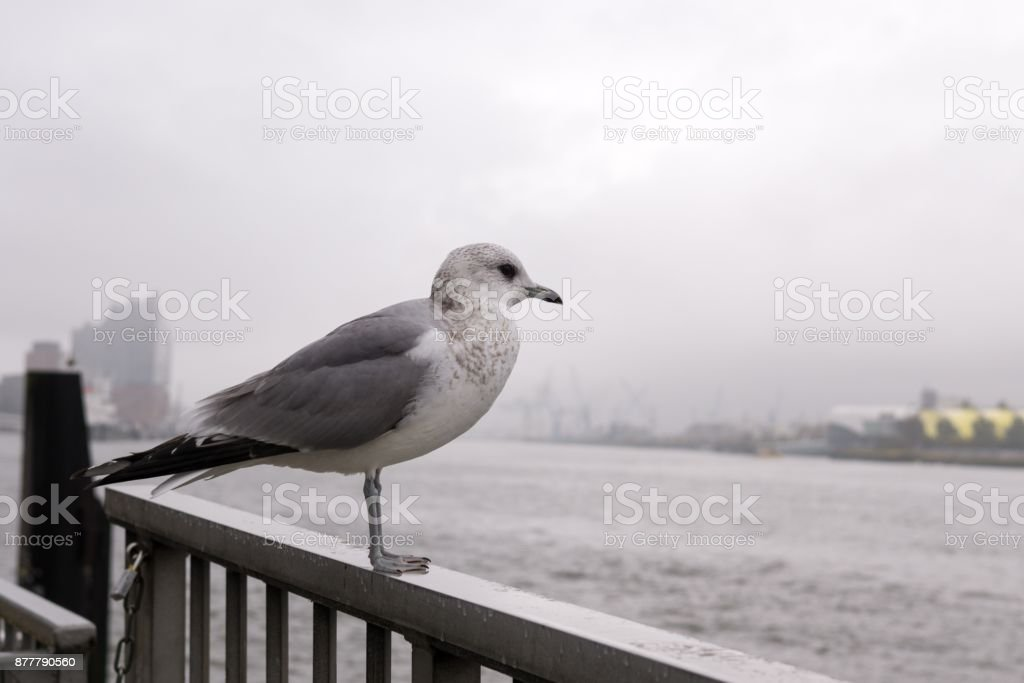 Seagulls in the harbor. stock photo
