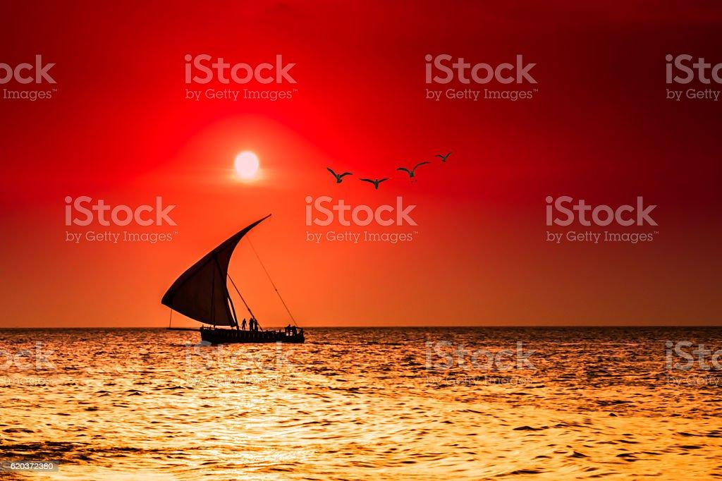 seagulls in the sun stock photo