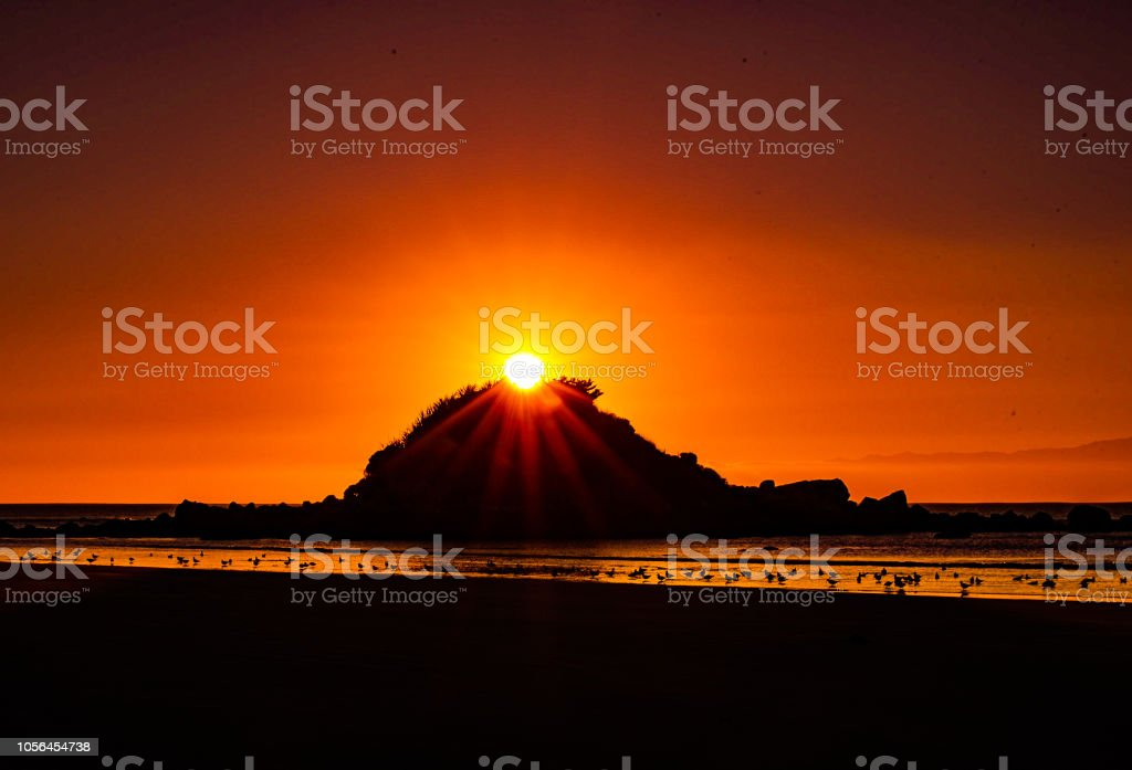 Seagulls in the sunset looking at island stock photo