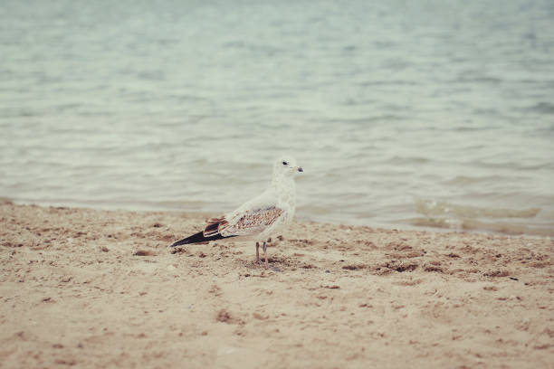 seagulls on beach on summer day - low contrast stock pictures, royalty-free photos & images