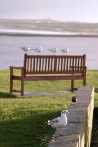 Seagulls On Bench 2 Stock Photo - Download Image Now