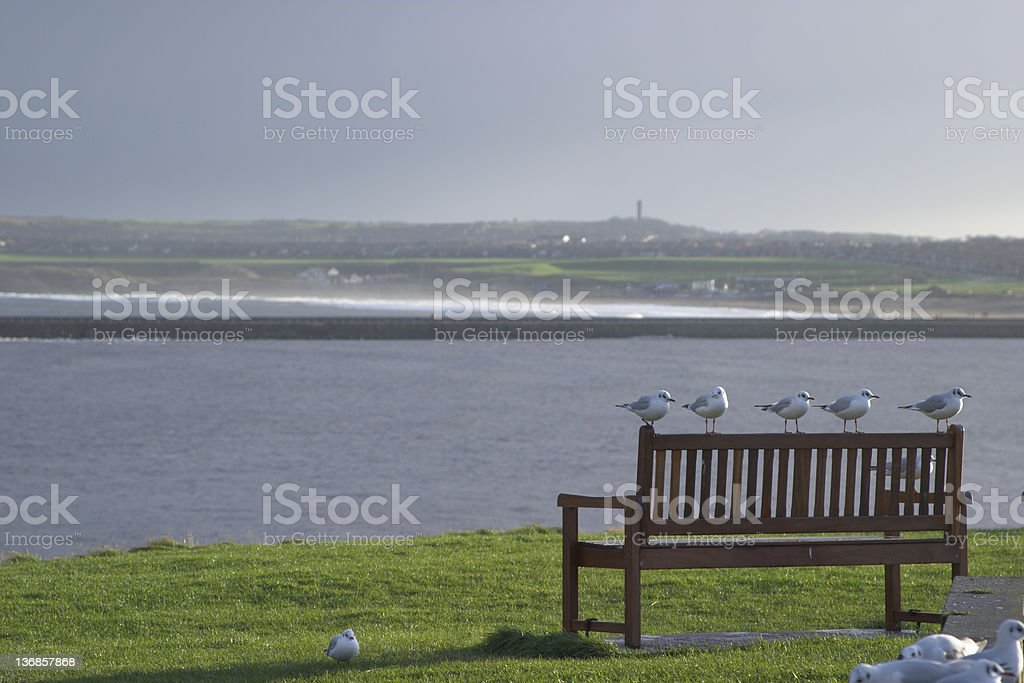 Seagulls on bench 5 seagulls on a bench overlooking the mouth of the river Tyne at Tynemouth.Some more seagulls in foreground. Above Stock Photo