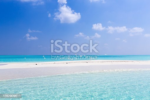Seagulls on maldivian sandbank in Indian ocean, flock of white birds on sandy coast with crystal azure color water, tropical unplugged nature