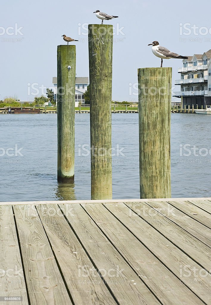 Seagulls on Pilings royalty-free stock photo