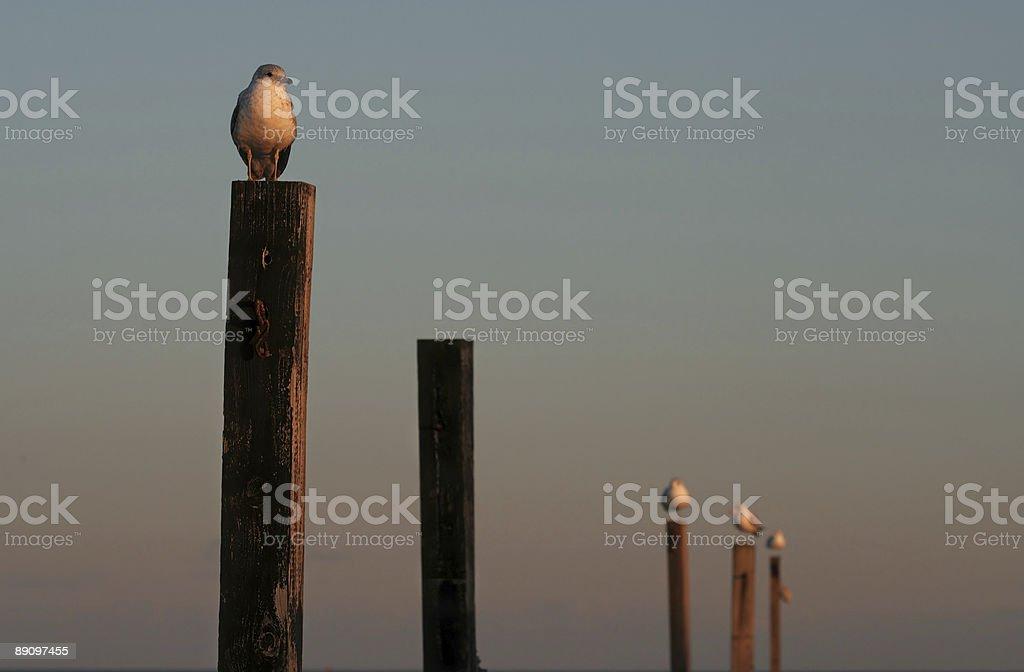 Seagulls on posts stock photo