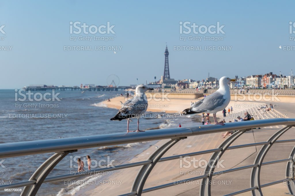 Seagulls on railing by the beach in Blackpool stock photo