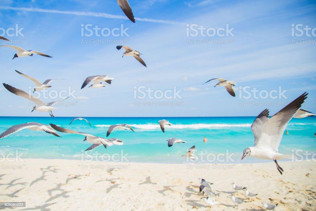 Seagulls on the beach. Cancun, Mexico stock photo