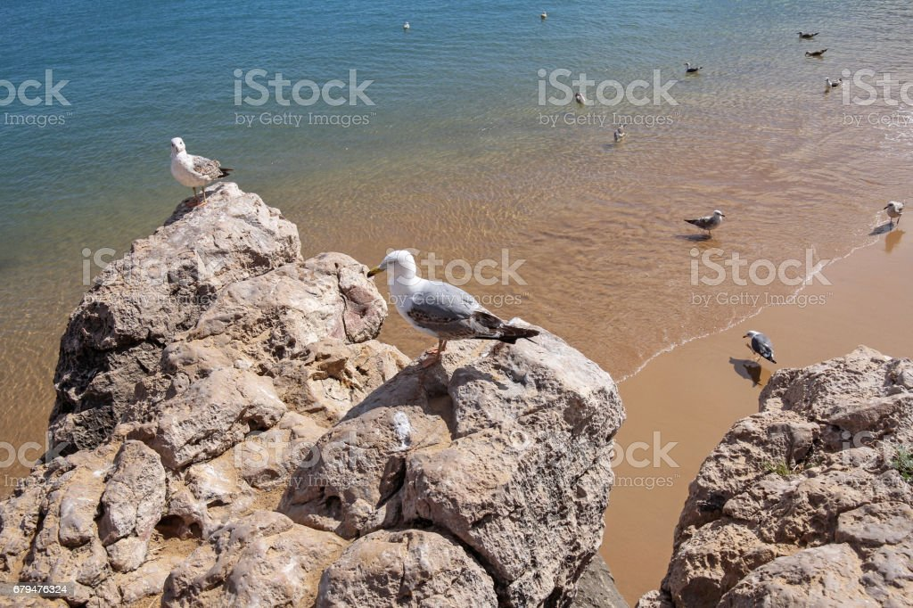 seagulls on the cliff -Portugal 免版稅 stock photo