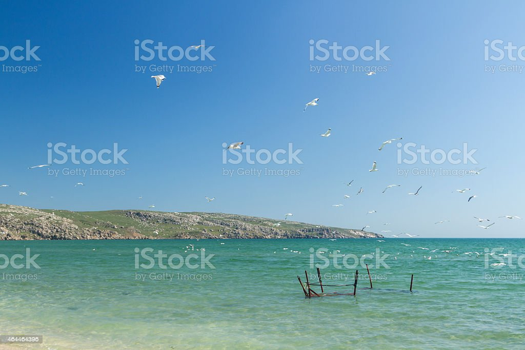 Seagulls on the coast of the Sea of Azov stock photo