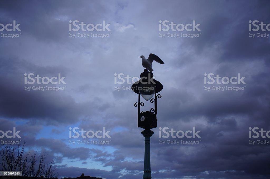 Seagulls on the lamp post stock photo