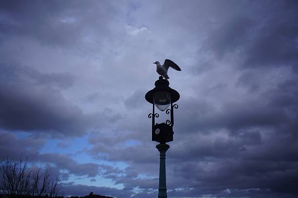 Seagulls on the lamp post stock photo